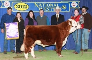 (Cade) Miniature Polled Hereford Bulls Cattle