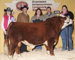 (Sully) Miniature Polled Hereford Bulls Cattle